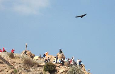 Cruz del cóndor, Cañón del Colca