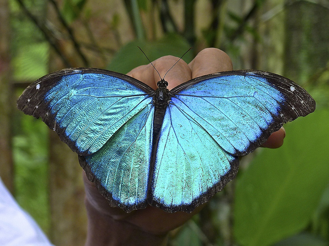 Pilpintuwasi - Granja de Mariposas y Orfanato Animal Amazonas