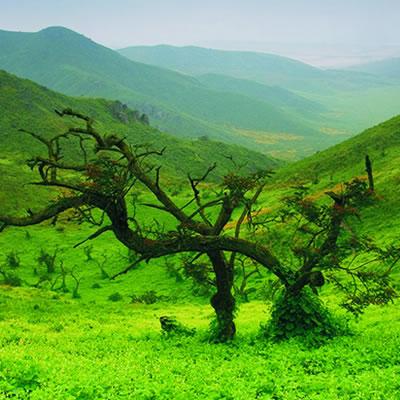 Reserva Nacional de Lachay